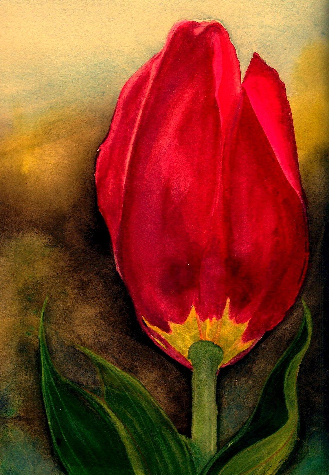 red tulip #1.jpg