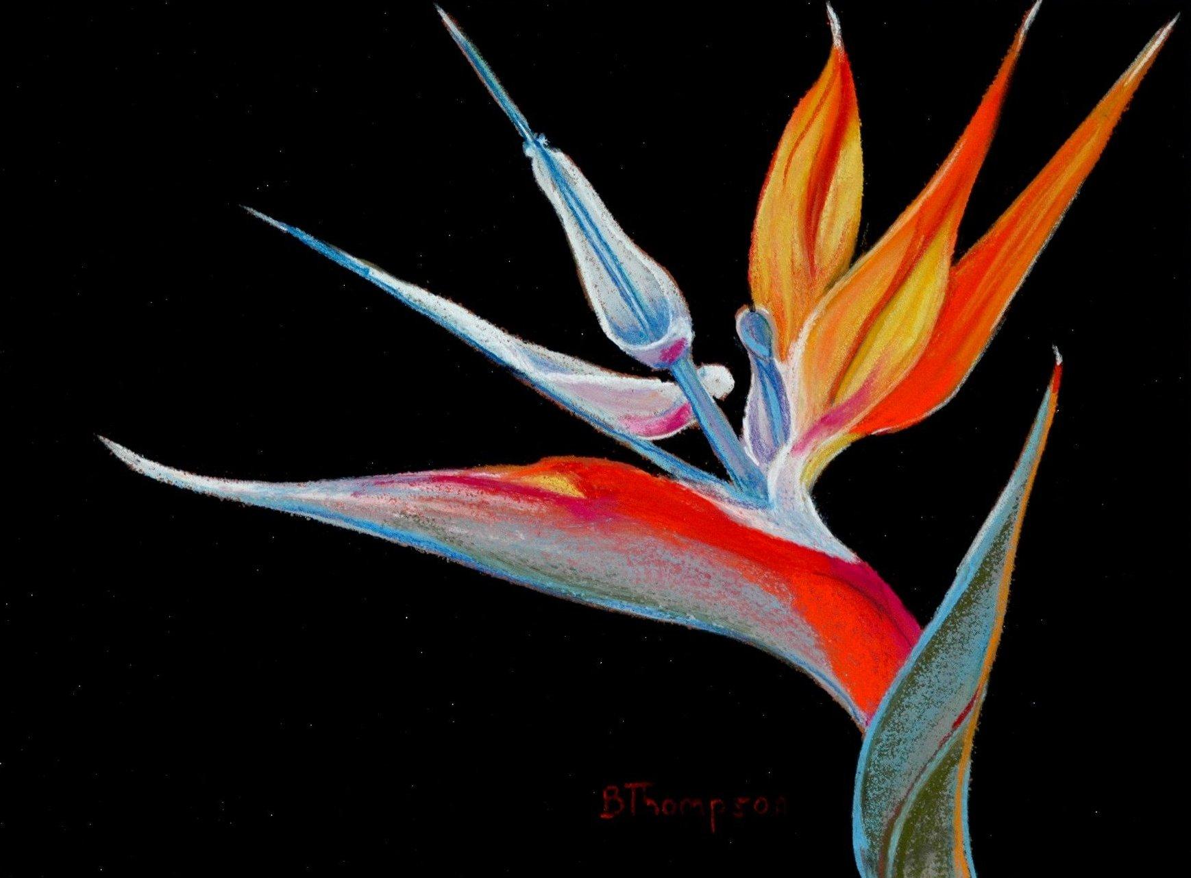 Bird of paradise pastel