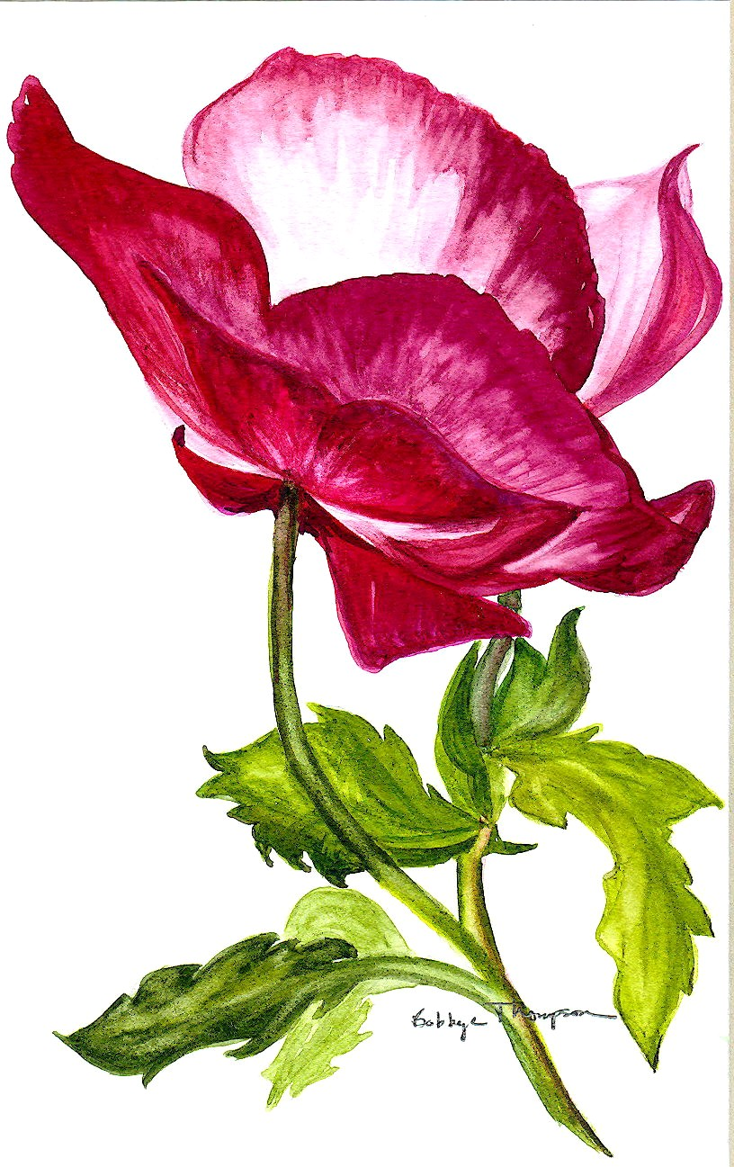Asian Poppy - Watercolor.jpg