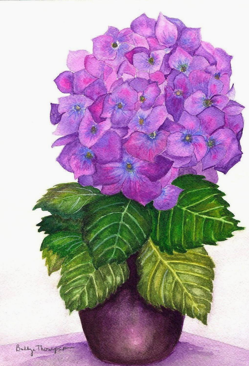 Hydrangea - Watercolor.jpg