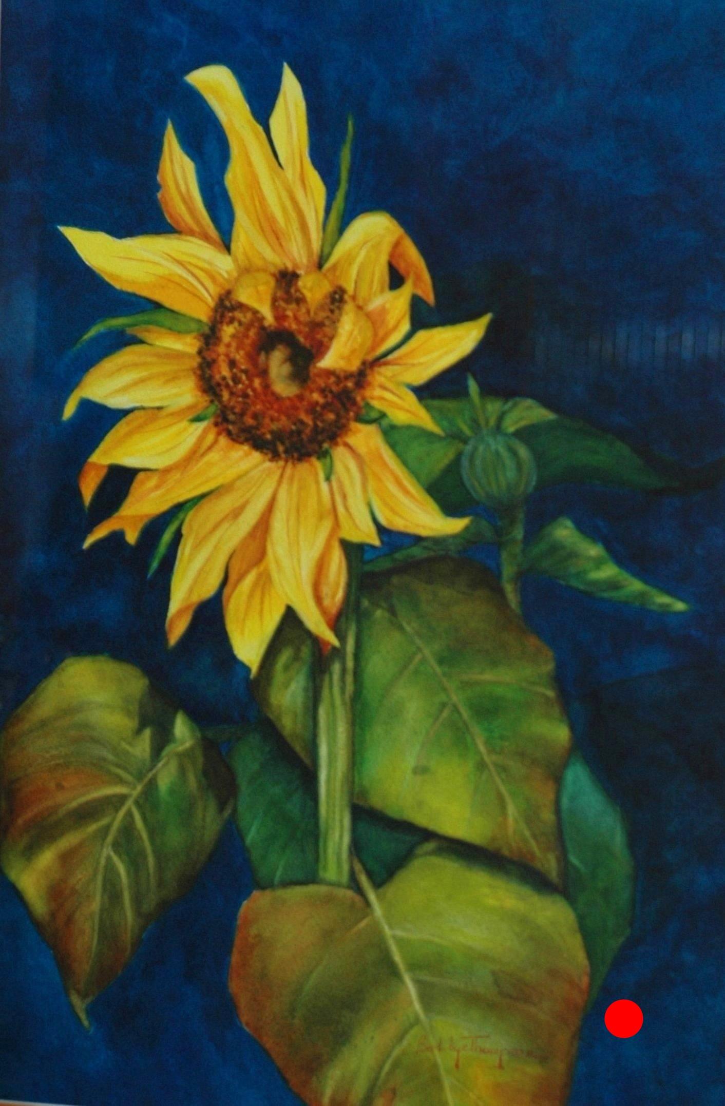 Sunflower  Splendor.JPG