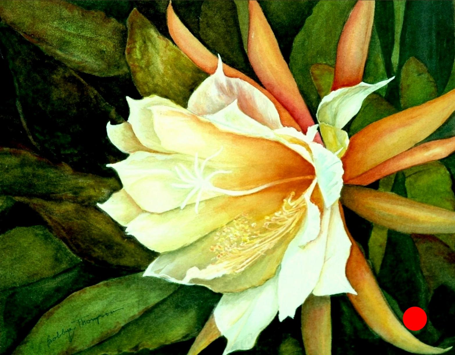 Frank's Epiphyllum
