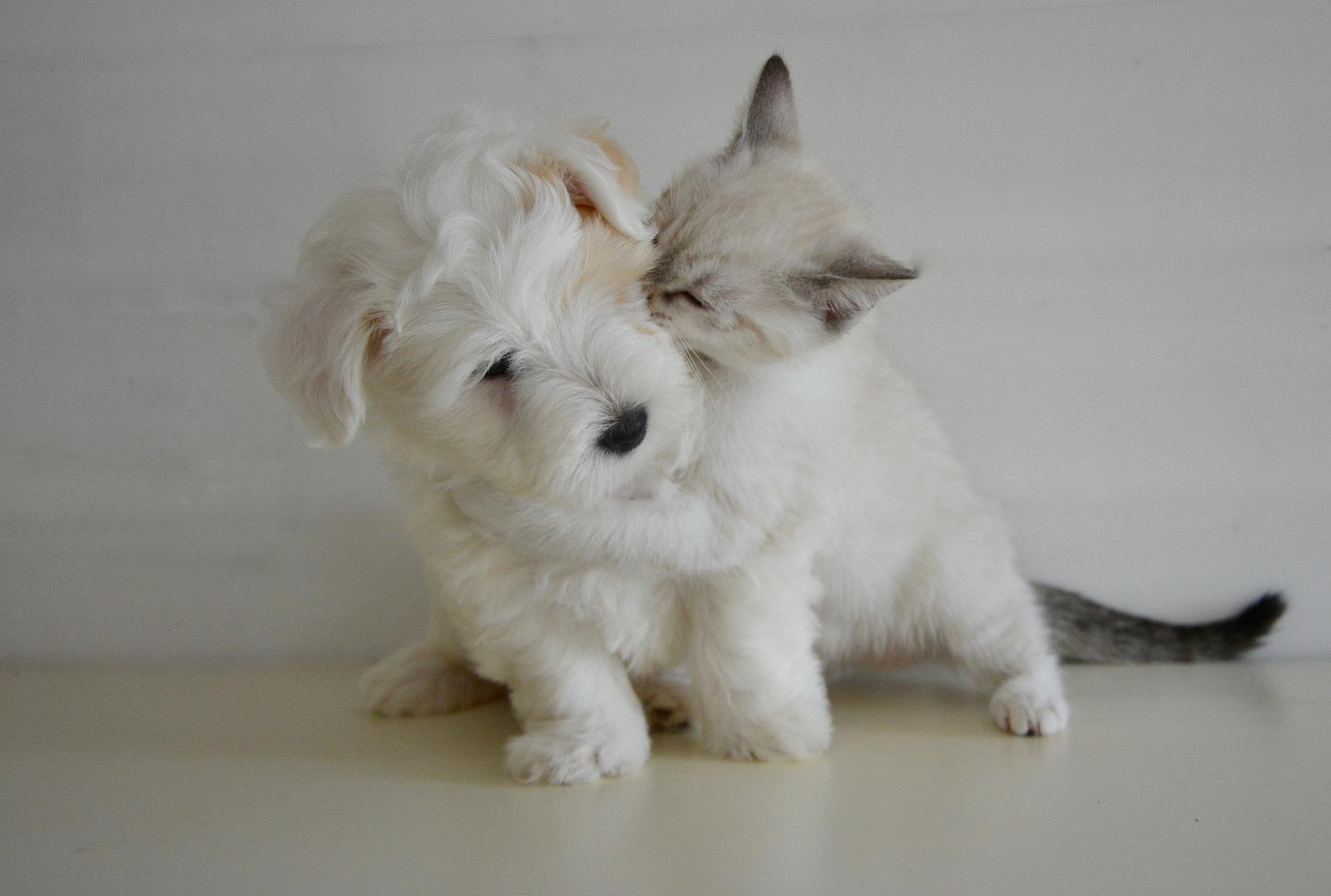 puppy-kisses.jpg