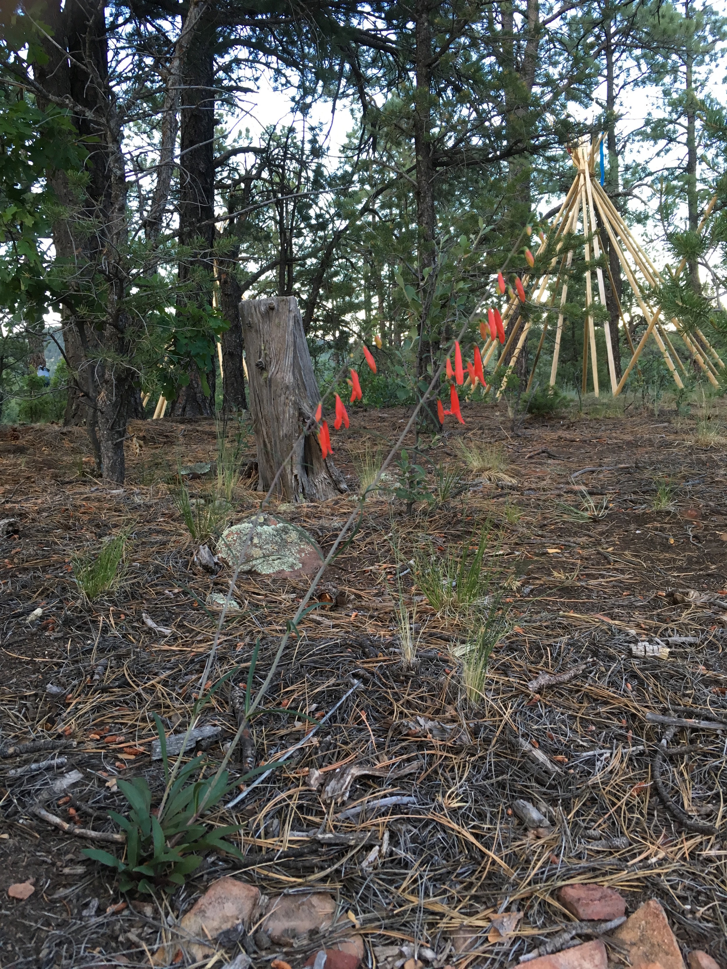 """This family orientated """"off the grid"""" experience features accommodations of 3 per tipi (lodge) in a village with up to 12 others for 4 days and 3 nights."""