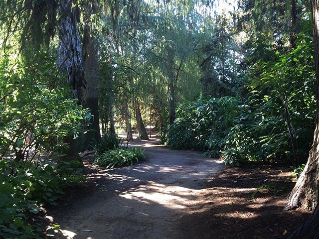 Paths in the forest #nature #green #laarboretum #botanical #locationscouting