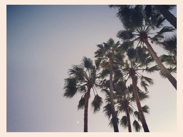 Venice at dusk #venice #venicebeach #palmtrees #beach #dusk #california