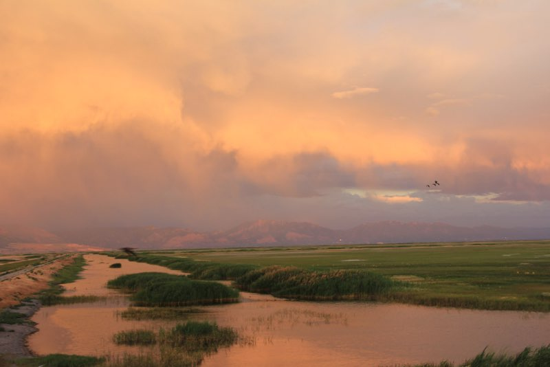 Bear River Bird Migratory Refuge I