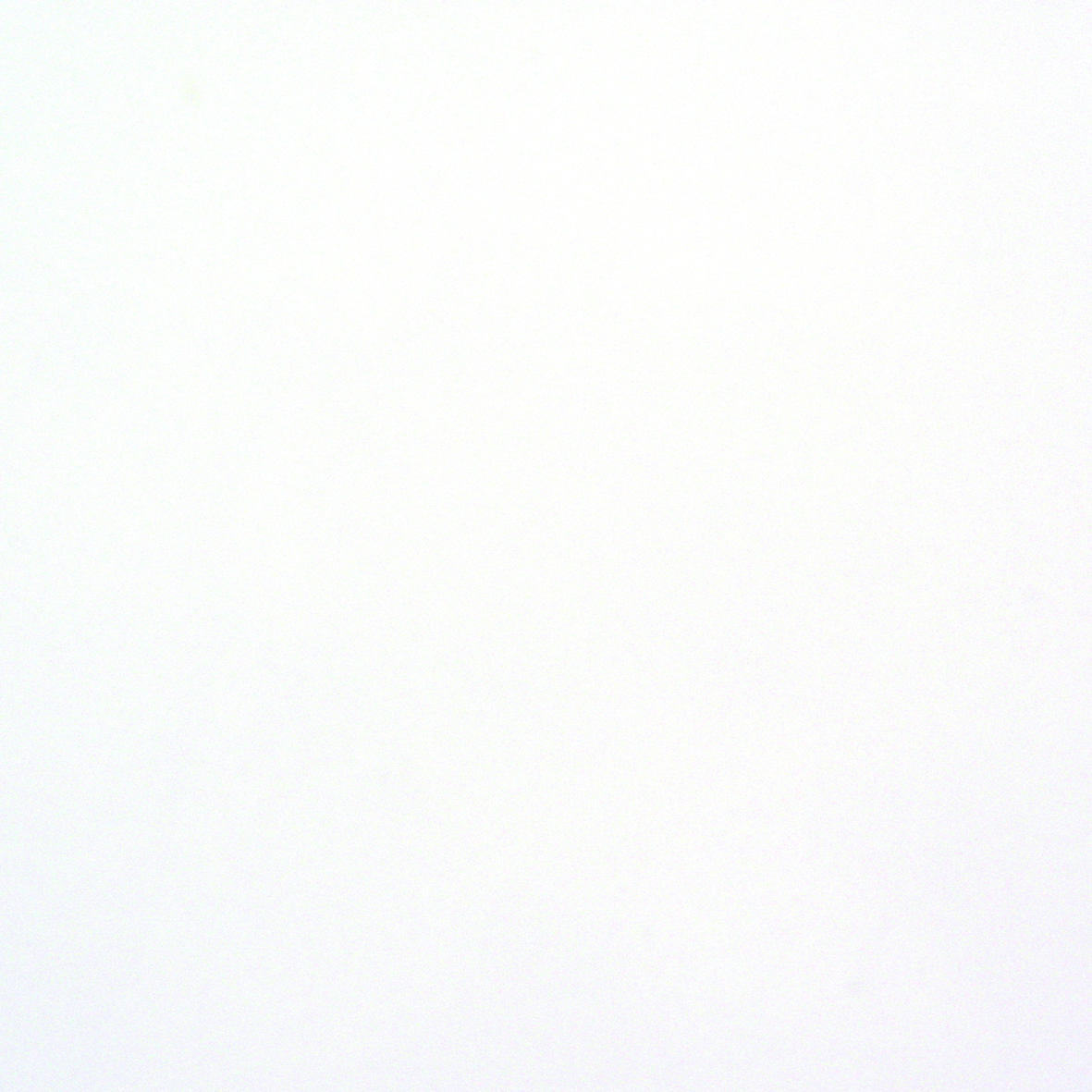 Hvid blank