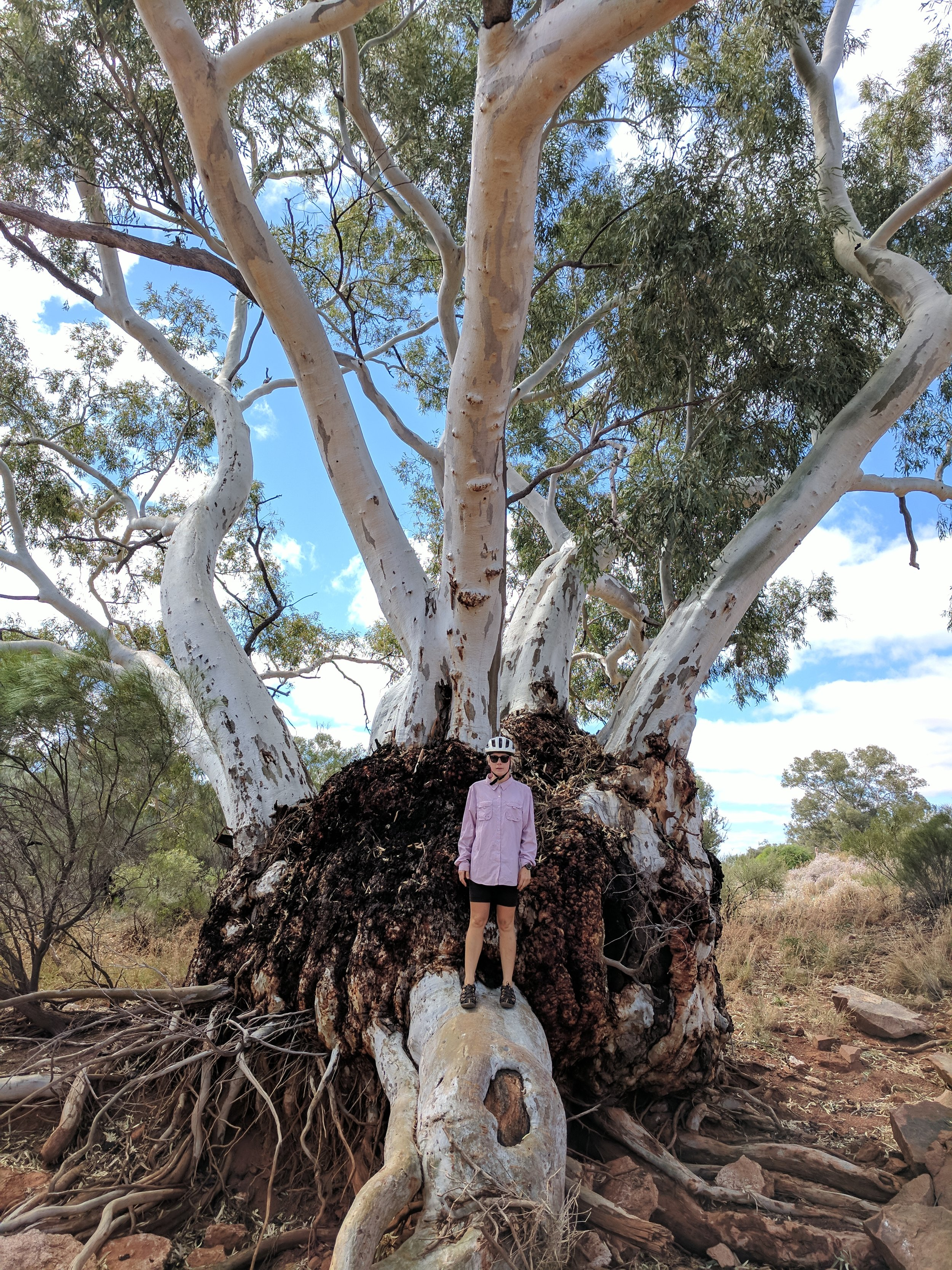 Incredible river red gum, adapt in this country or die (refer to reference [ix] for content)