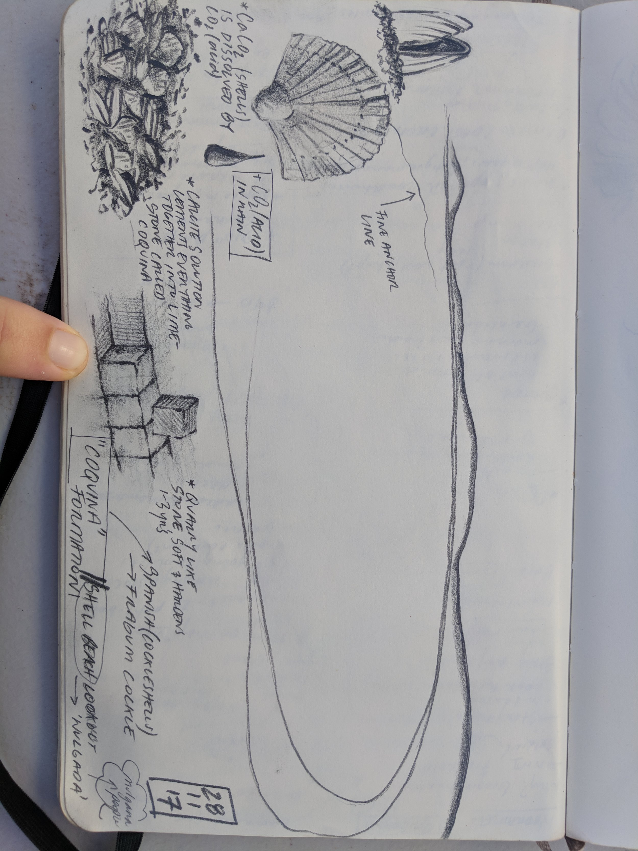 Shelly Beach Lookout sketch, magnificent lines