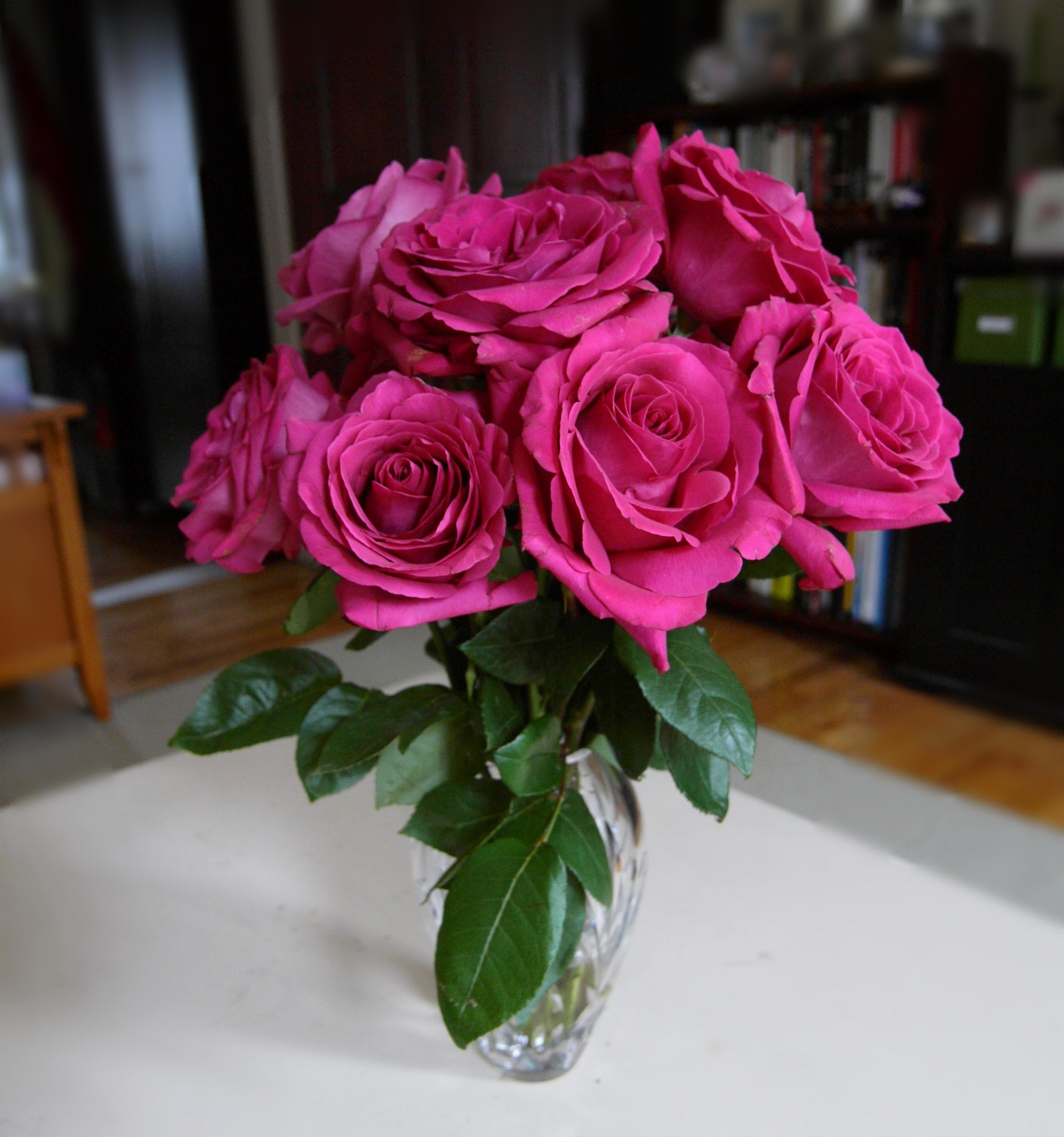 hot pink long stem roses.jpg