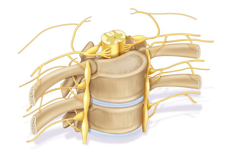Spine and CNS.jpg