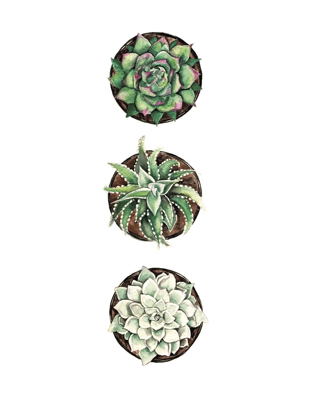 succulent print.jpg