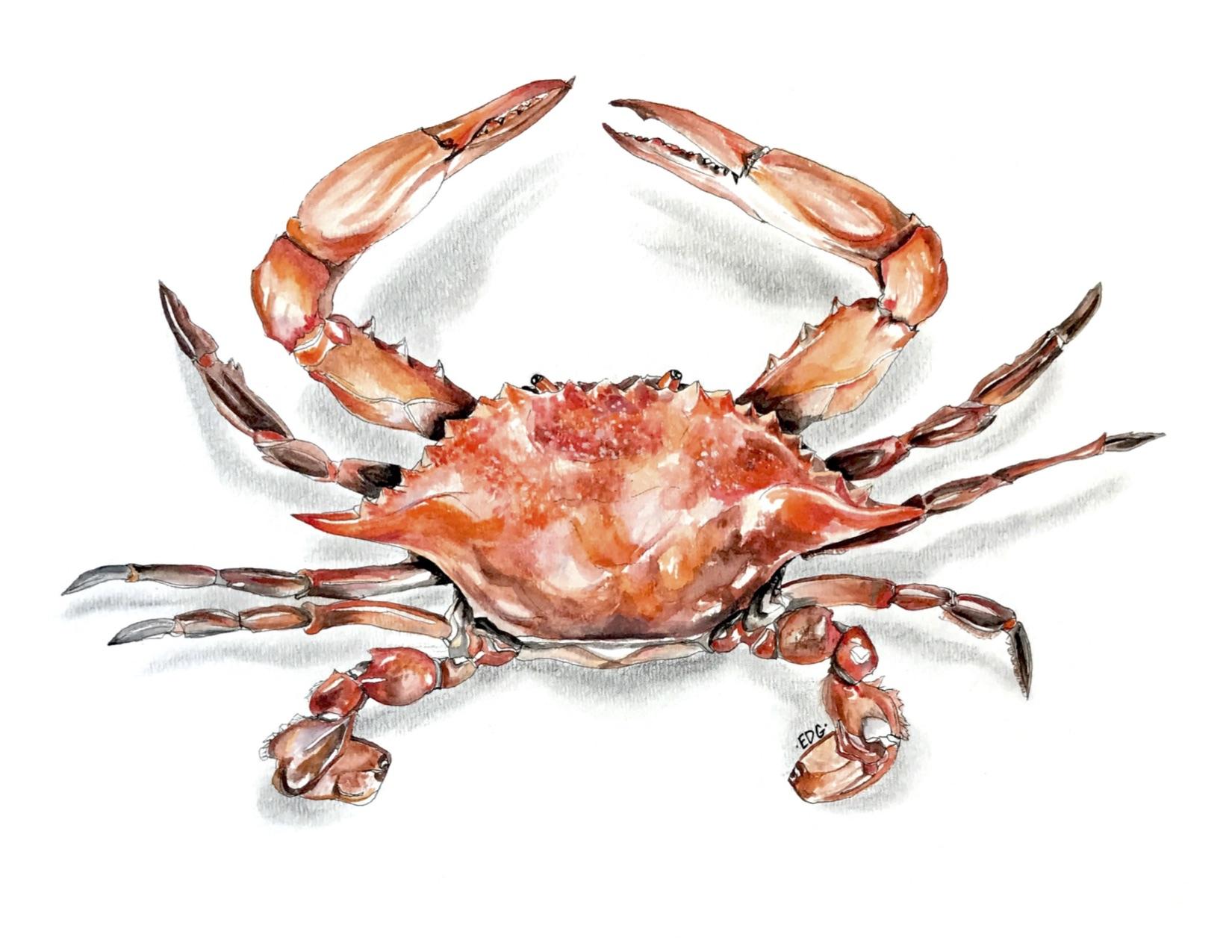 crabprint.jpg