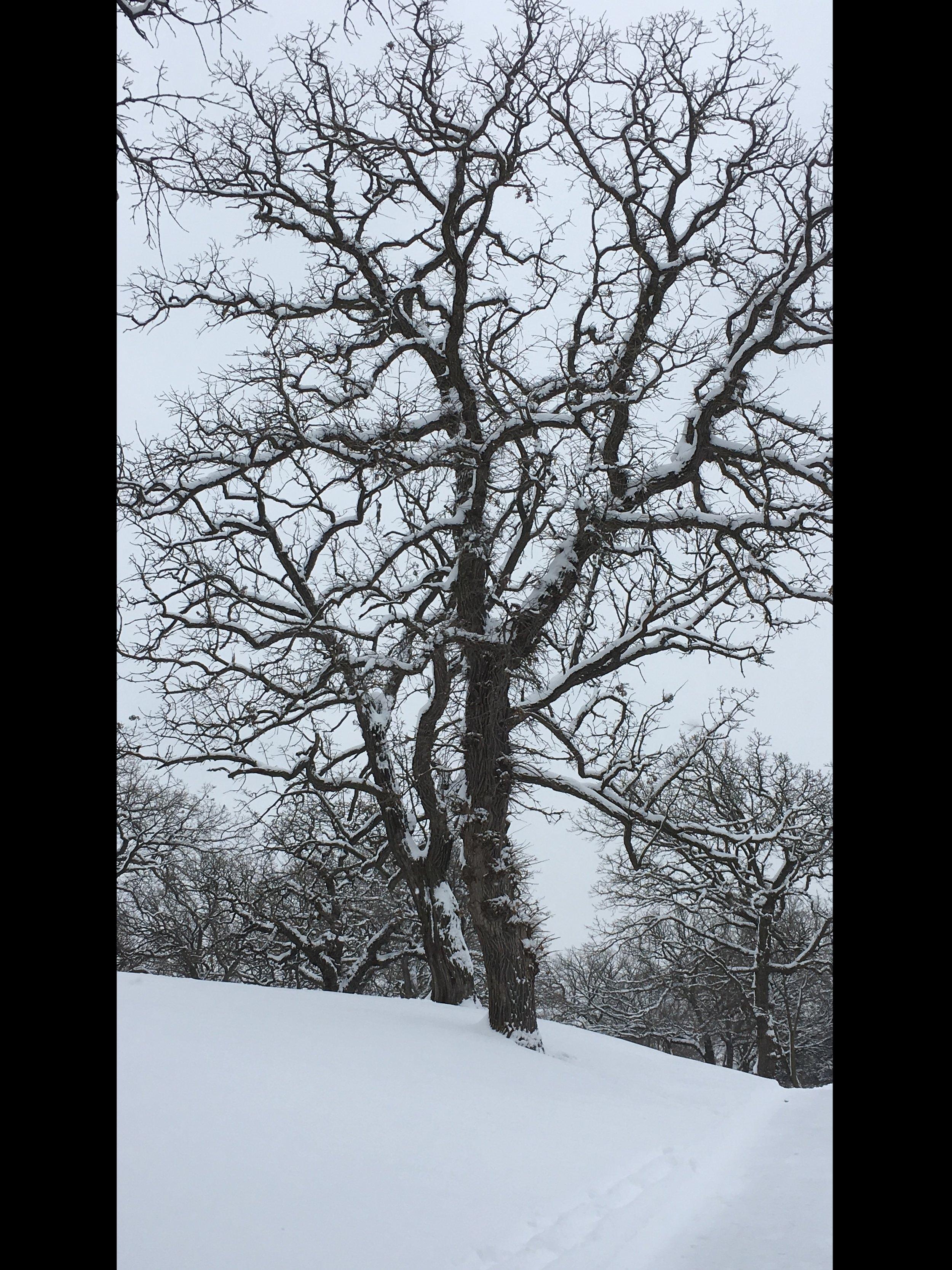 2016-12-11 14.28.44.jpg