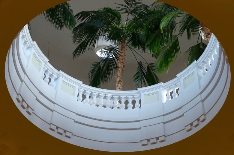 The Palm Room is near the top of the dome at the Alberta Legislature. In the dome there are five palm trees. Today the trees are between five and seven metres high. The Palm trees were a gift from The State of California in 1932.