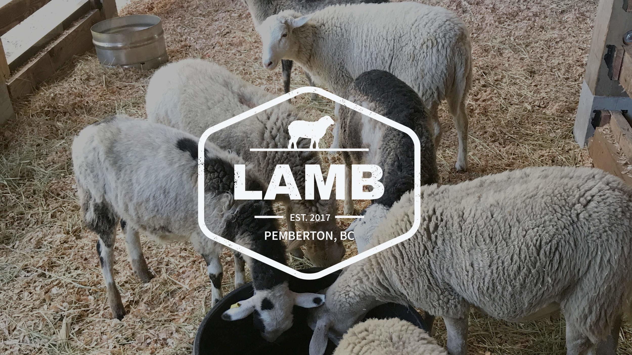 pemcap-lambs.jpg
