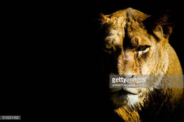 Photo by umbertoleporini/iStock / Getty Images