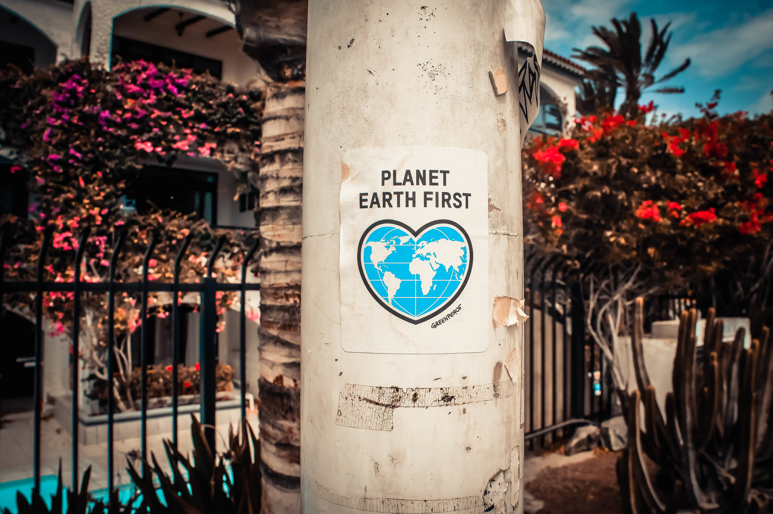 Planet Earth First Sign on Tree
