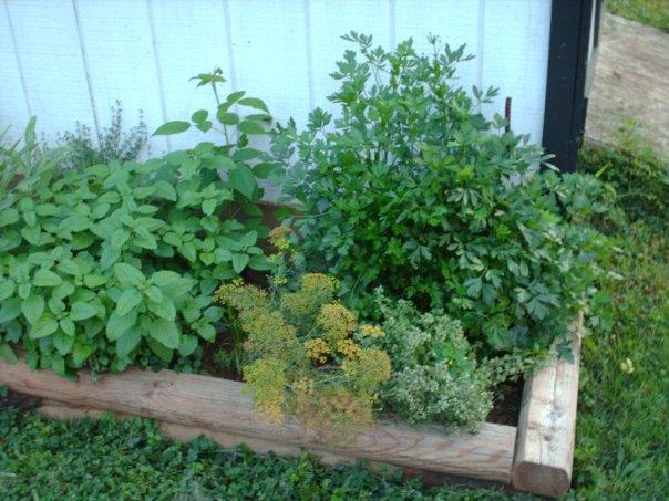 My herb garden, Shippensburg PA