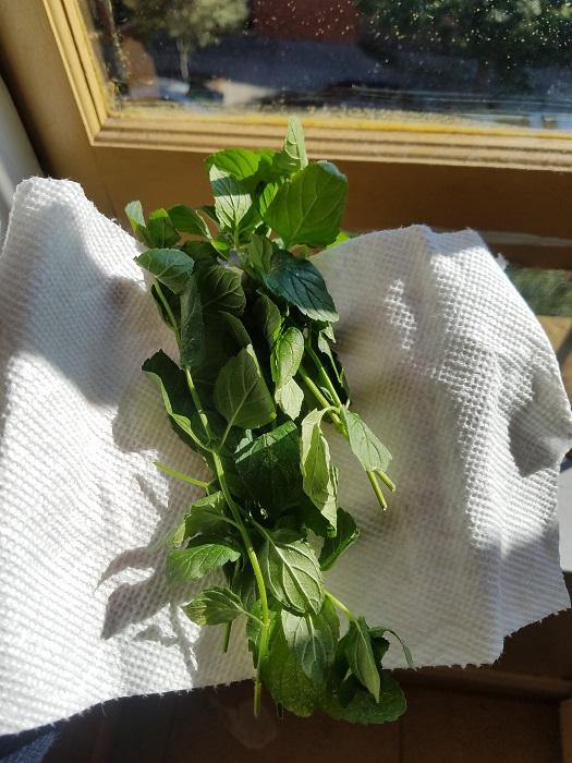 Fresh mint from Cait & Trevor's garden