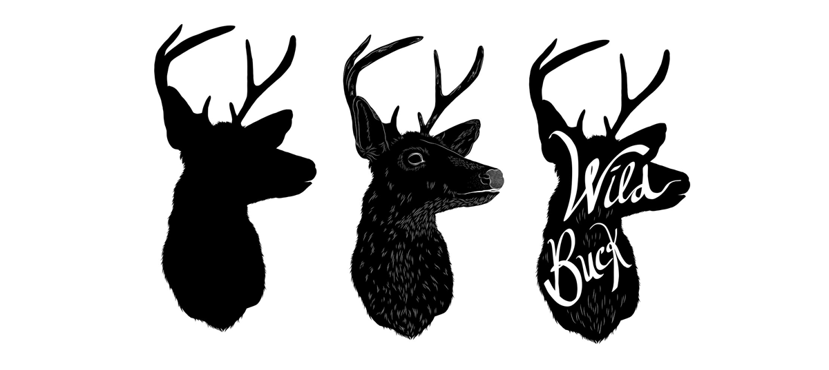 Buck_illustrations_ForWebsite .png