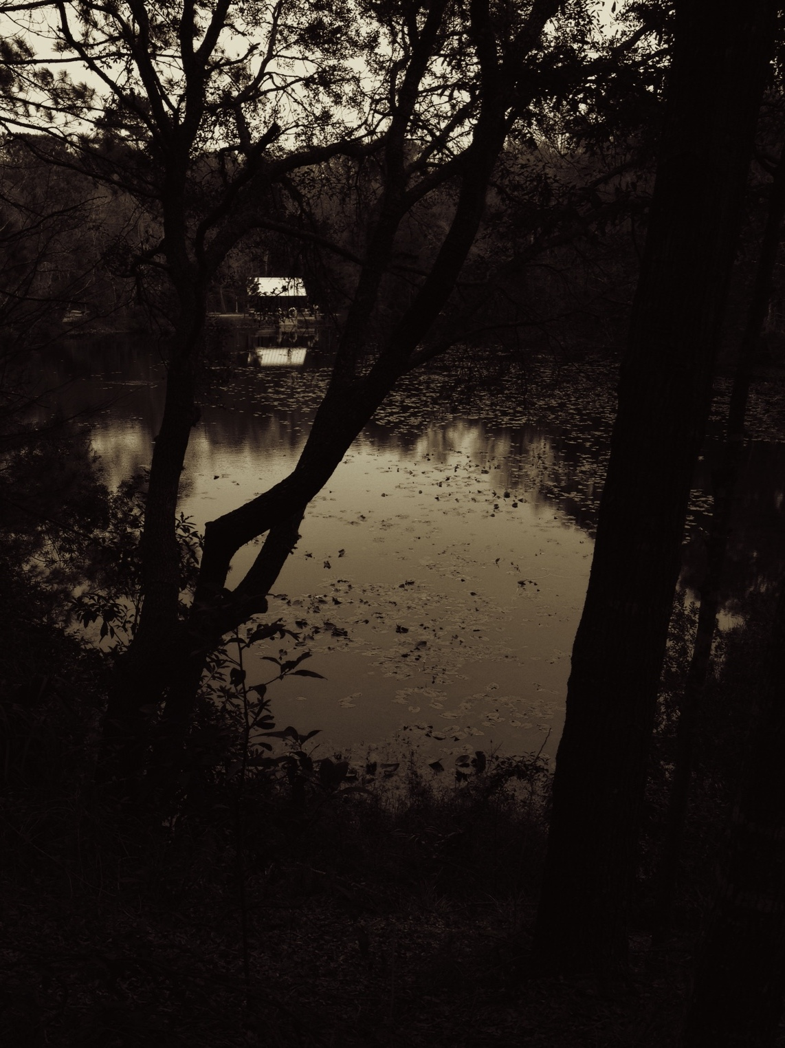 Last of the sepia light