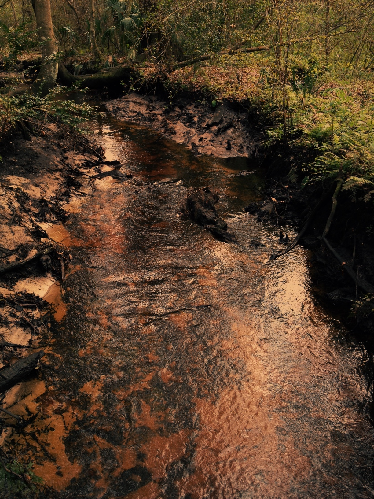 Copper leaf stream