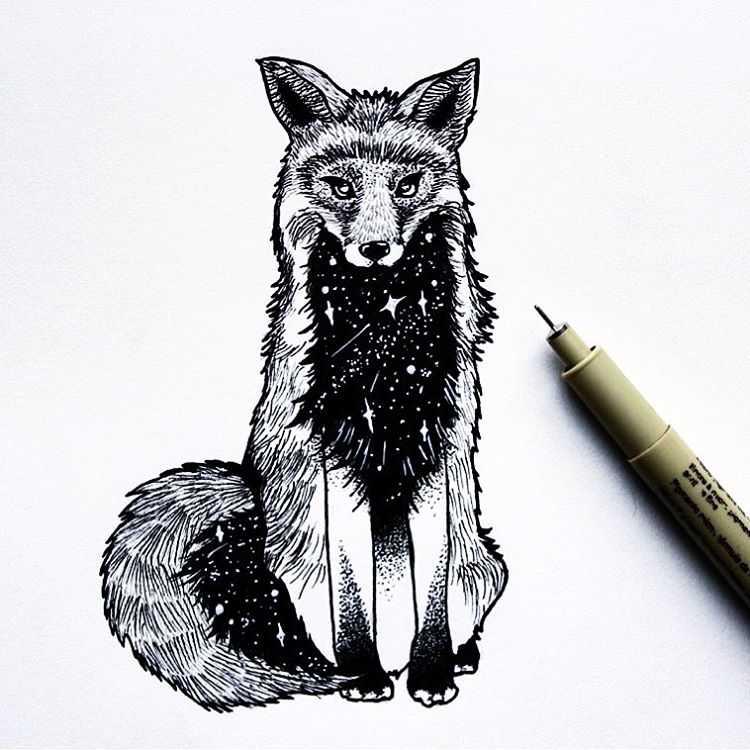 Galaxy Fox.jpg