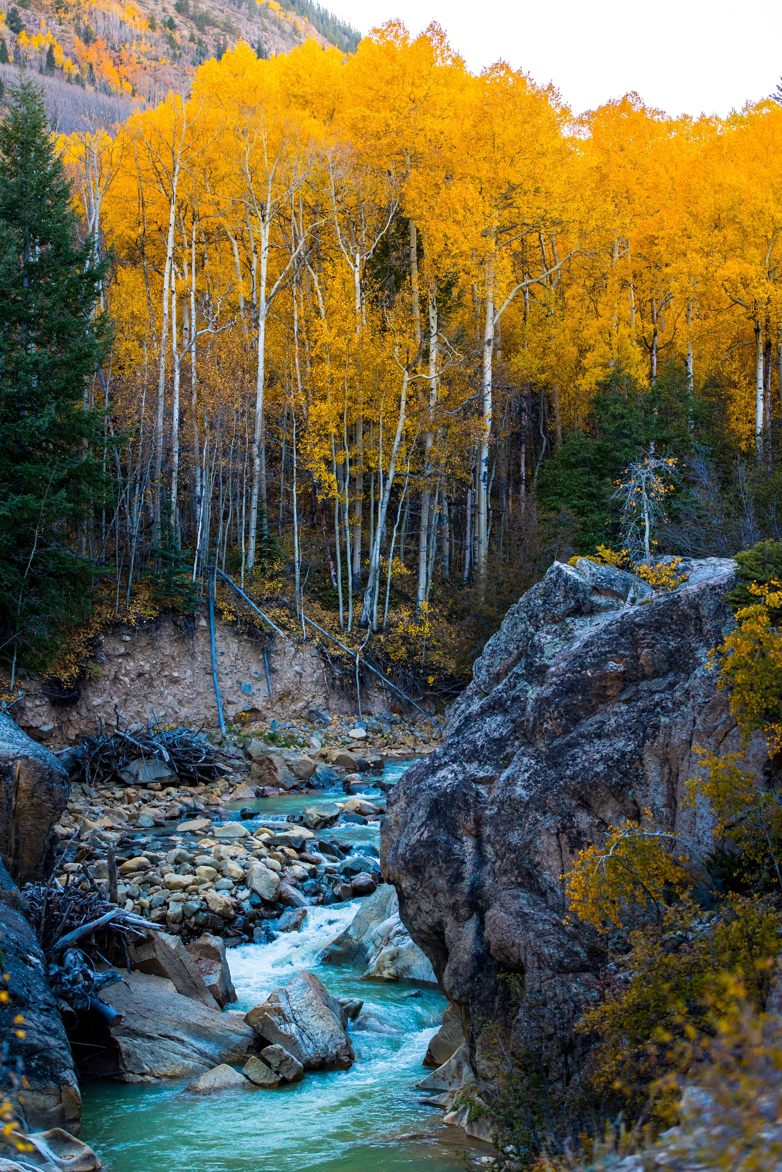 Stream cutting through forest edge,  Nathan Anderson