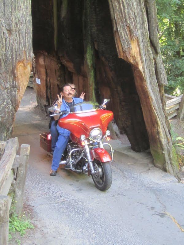 Drive Thru Tree -