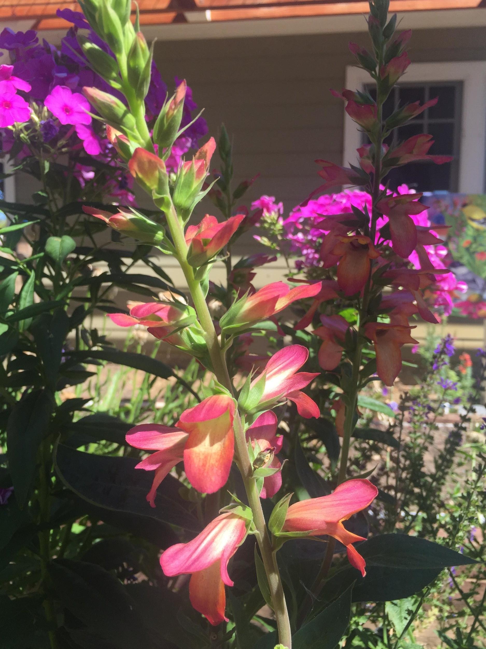 flowers_Gratus_Vineyards.jpg