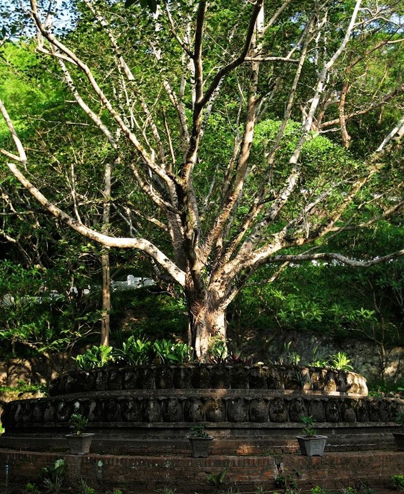 bodhi-tree-collage22.jpeg