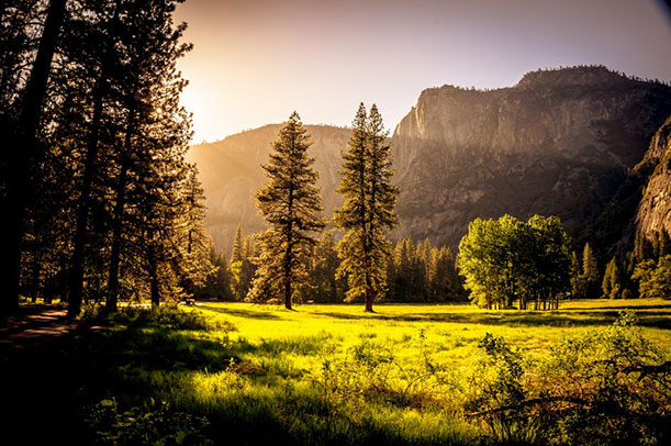 4-by-6-forest-photo.jpg