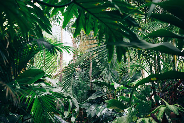 4by6-jungle-photo.jpg