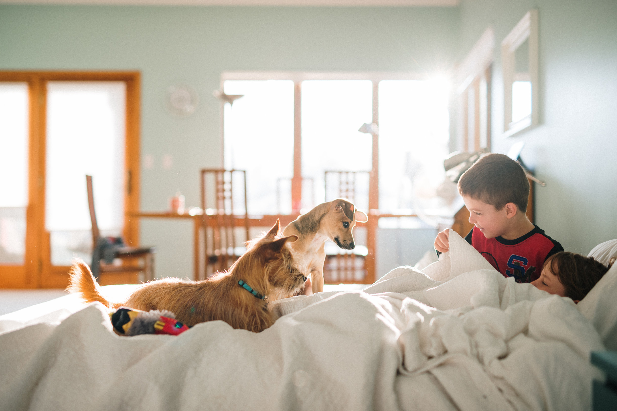 children with puppies in morning light_.jpg