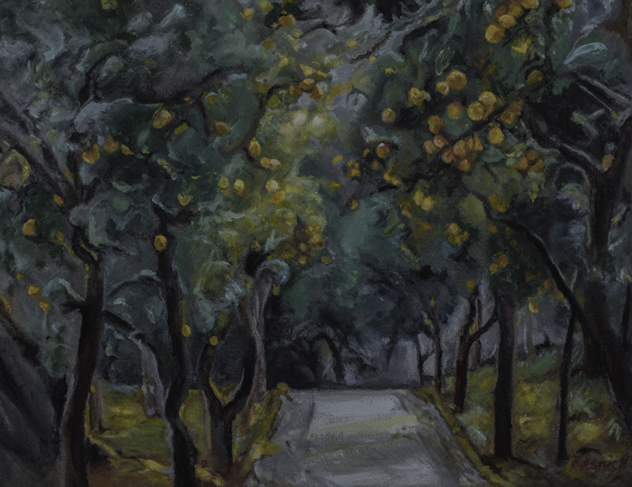 Road-to-the-lemon-grove.jpg