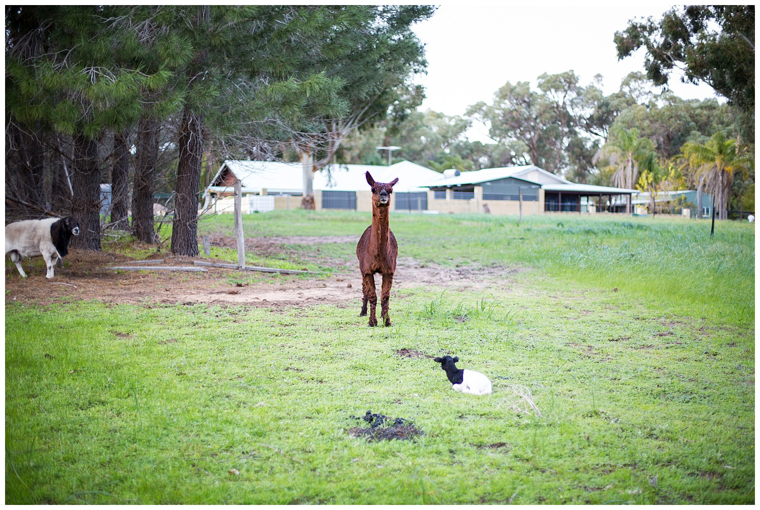 farm_engagement_horse_dog_western_australia_0020.jpg
