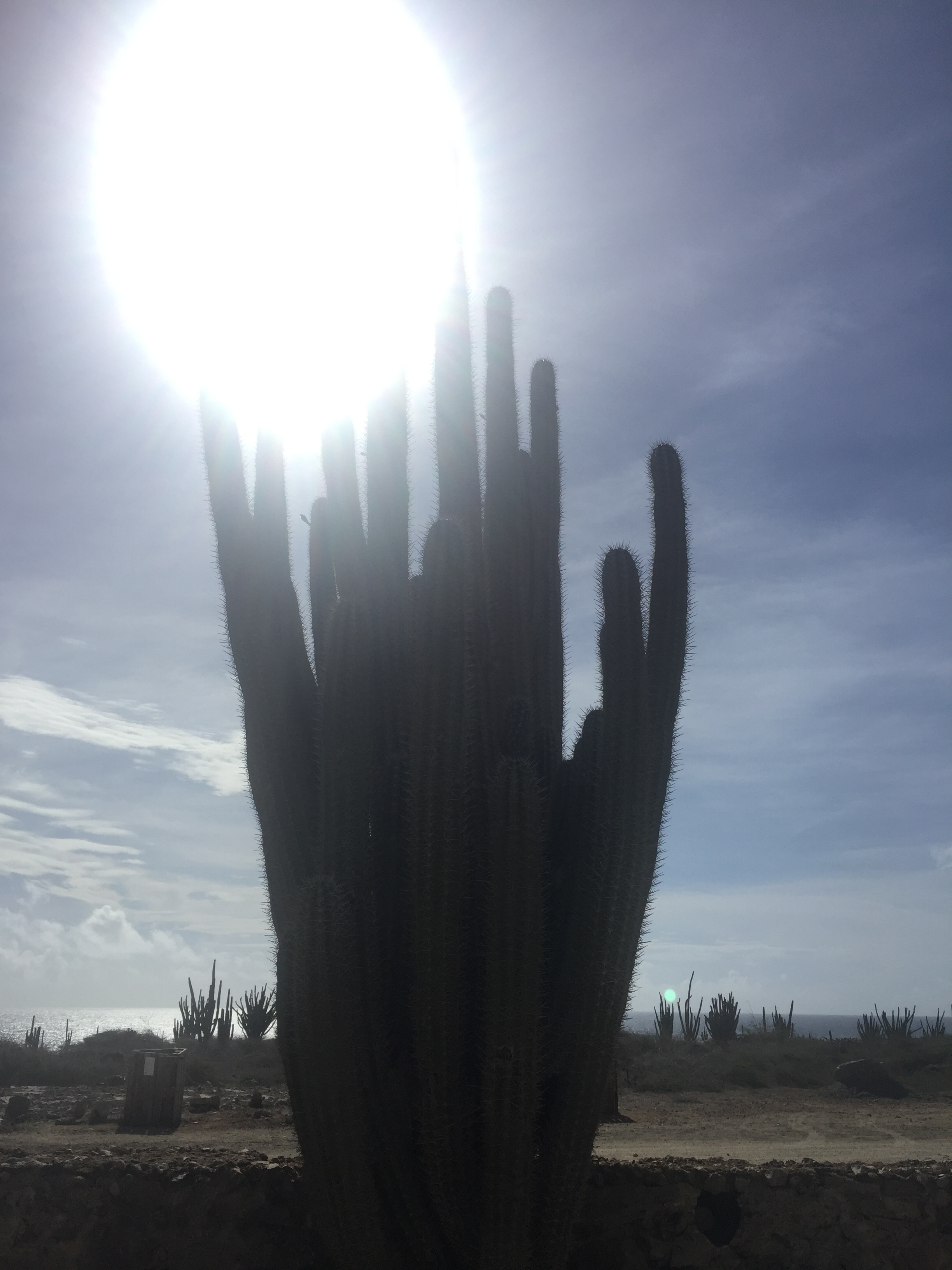 A Cactus, Just Because