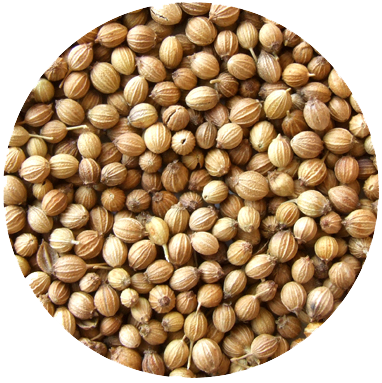 CORIANDER SEEDS   We were surprised and delighted to find coriander seeds grown commercially in the UK. Compared to their overseas cousins, we found our UK sourced coriander to be richer in warm orange perfume and taste while retaining that necessary delicate spiciness. Alongside lemon, together they combine to make a wonderfully full citrus spectrum providing their warm orange base to lemon's high note 'ping'.