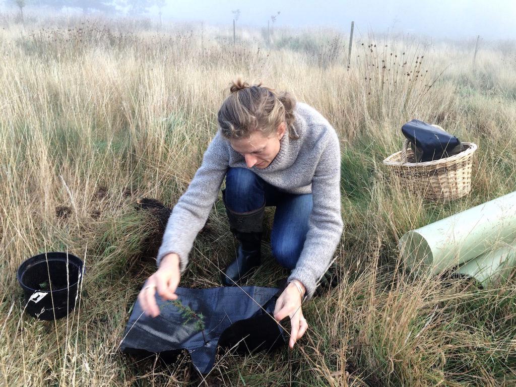 Planting seedlings on the moor