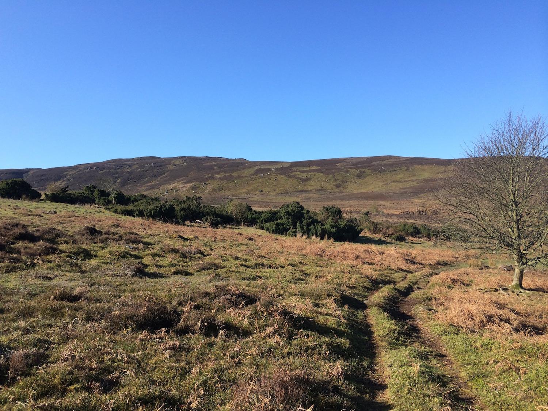Hepple Moorland.jpg