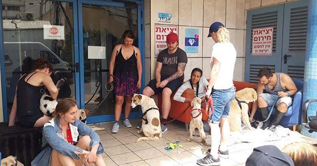 Hejsan! Vi är som bäst på studieresa till Tel Aviv i Israel! Här står vid dogsheltret där vi tar hand om hundar som hämtas från byar nära Gaza 🐕❤️ Våra klasskamrater på hundkonsultlinjen är också med oss! 🇮🇱☀️ #djurvård #studieresa #telaviv #israel #dogshelter #hund #koira #dog #djur #eläimiä #animals #hundkonsult #borgåfolkakademi #folkhögskola #kansanopisto #folkhighschool #borgå #porvoo #finland