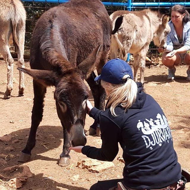 Vi har varit denna vecka vid The Ape Sanctuary 🐵❤️🇮🇱 Vi har gett mat och umgåtts med djuren samt målat staket åt dem 🦚🐰🦜 #studieresa #djur #eläimiä #animals #djurvård #apesanctuary #monkeysforest #israel #borgåfolkakademi