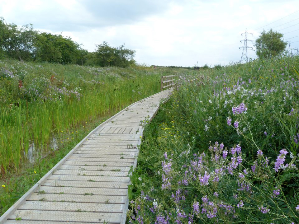 Boardwalk to the ponds