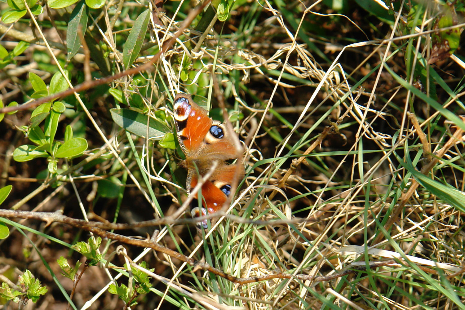 A butterfly spotted on a Wat Tyler walk