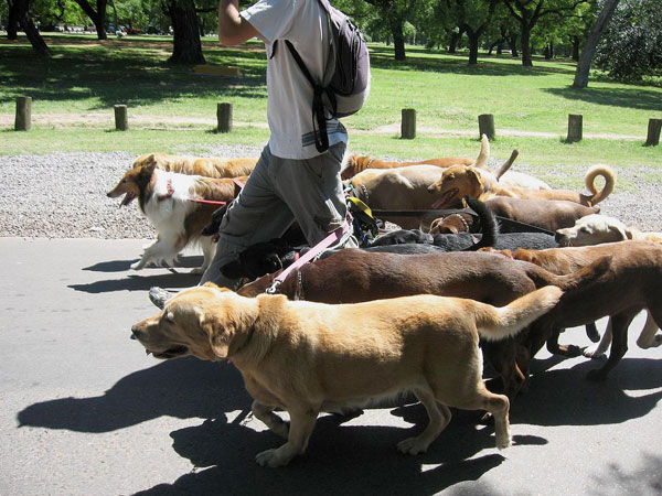 Dogs must be kept on leads