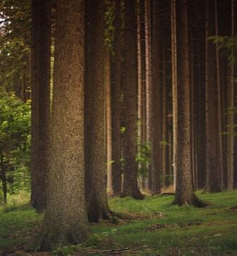 forest-1850640_640.jpg
