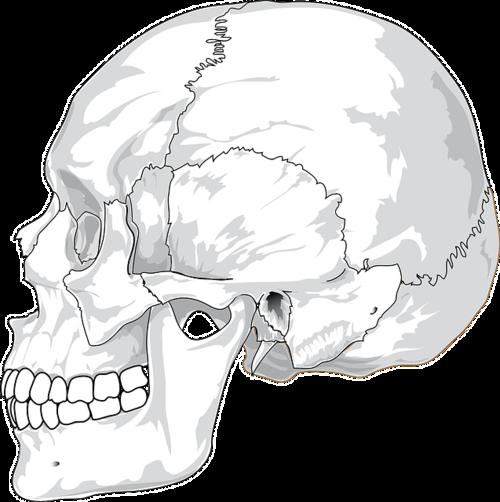 skull-31060_640.png