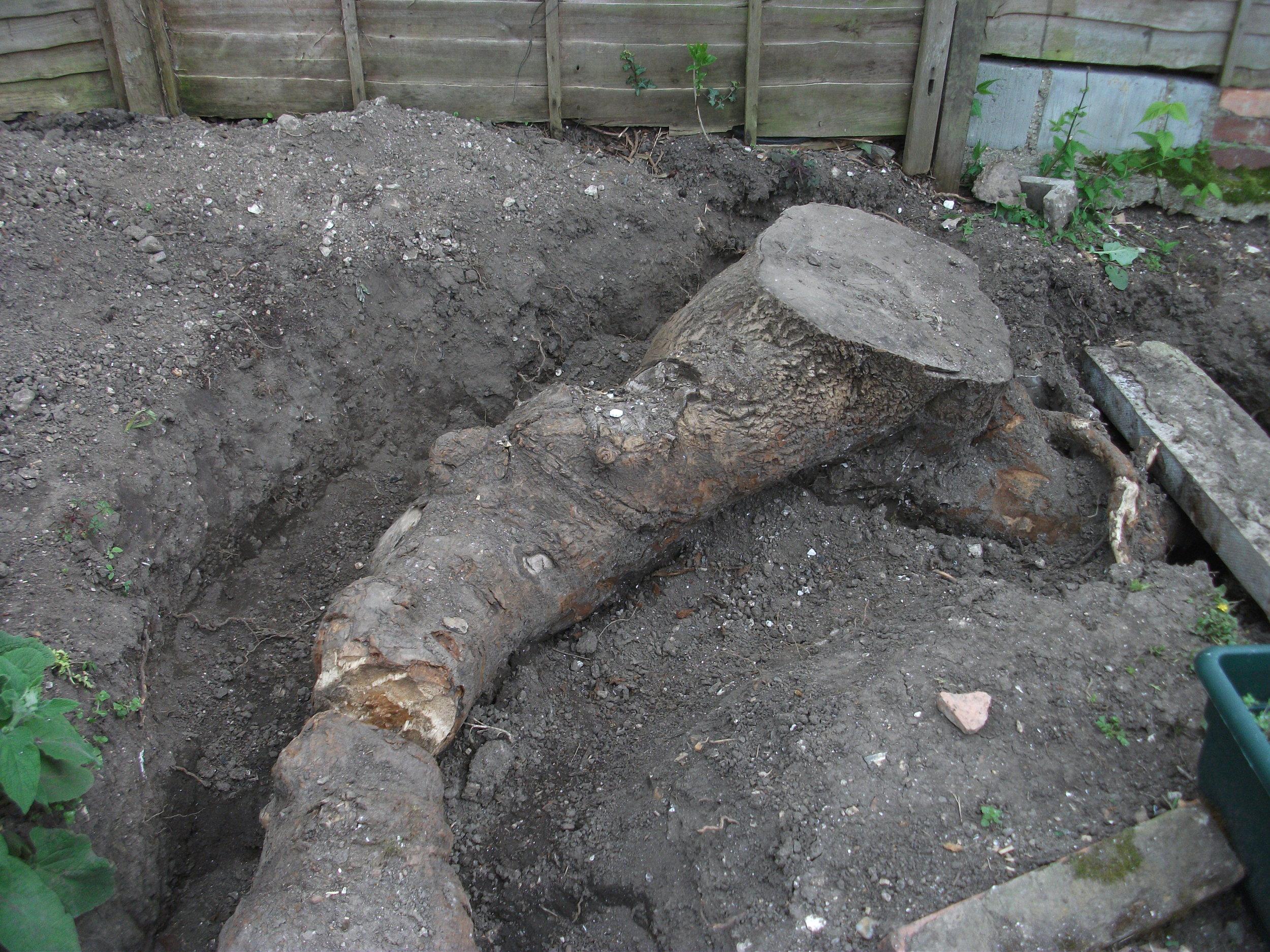 stump removing